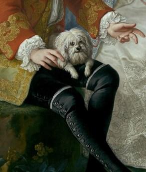 Cani a corte: il cane del conte Giacomo Durazzo, particolare da un ritratto di Martin Van Meytens conservato al Metropolitan Museum of Art