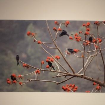 "Una delle opere della mostra fotografica del monaco buddista Matthieu Ricard ""Un demi-siècle dans l'Himalaya : un hymne à la beauté"""