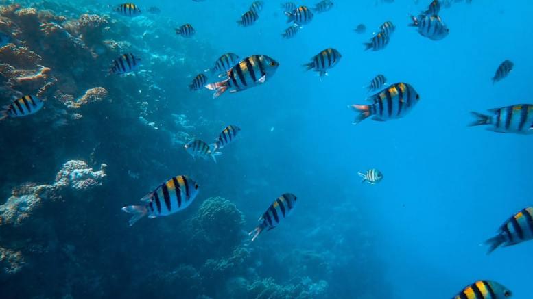 Inquinamento da Plastica in Mare: Monaco Membro Fondatore del Nuovo Gruppo ONU