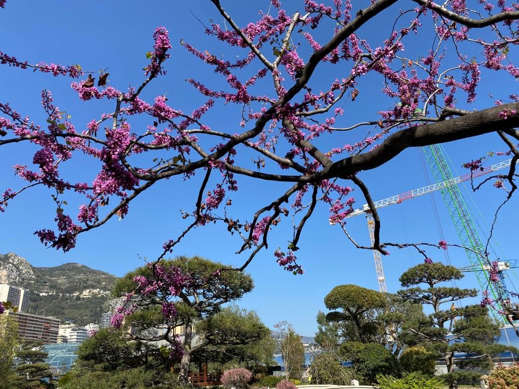 Giardino Giapponese di Monte Carlo: Fiori di Primavera