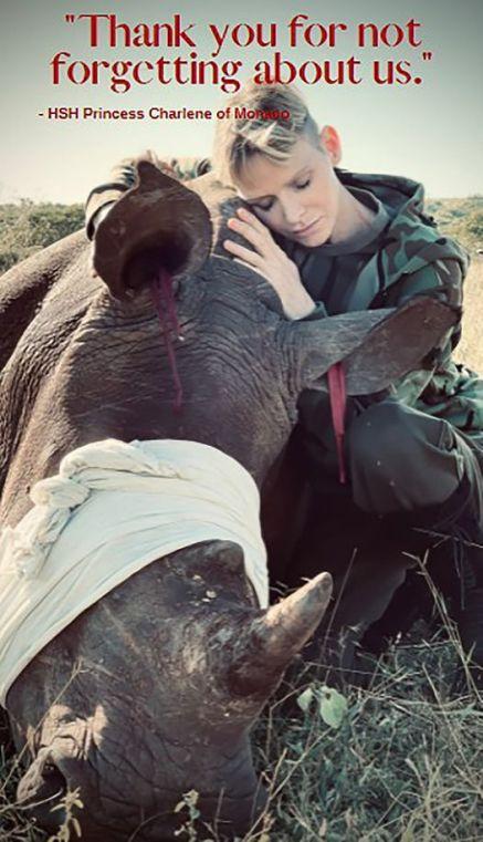 Charlene di Monaco e la Campagna di Protezione dei Rinoceronti