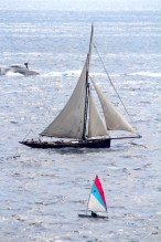 A windsurfer sailing with the classic boats during MCW2015@IMG_6858