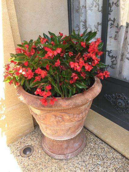Ancient pot with flowers at Villa Gallici@CelinaLafuenteDeLavotha