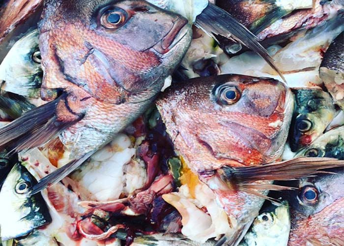tokyofishmarket.jpg