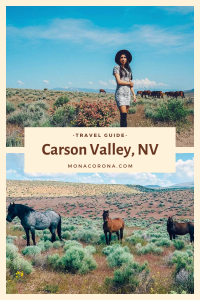 Looking for things to do in Carson Valley Nevada? Click here to read all about the top things to see in Carson Valley, Where to stay in Carson Valley, and Carson Valley Restaurants. If you love wild horses you definitely don't want to miss this! | #monacorona #carsonvalley #nevada #reno #travel #hotel #restaurants #horses #wildhorses