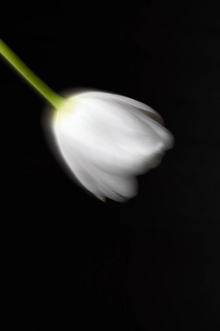 Tulip motion