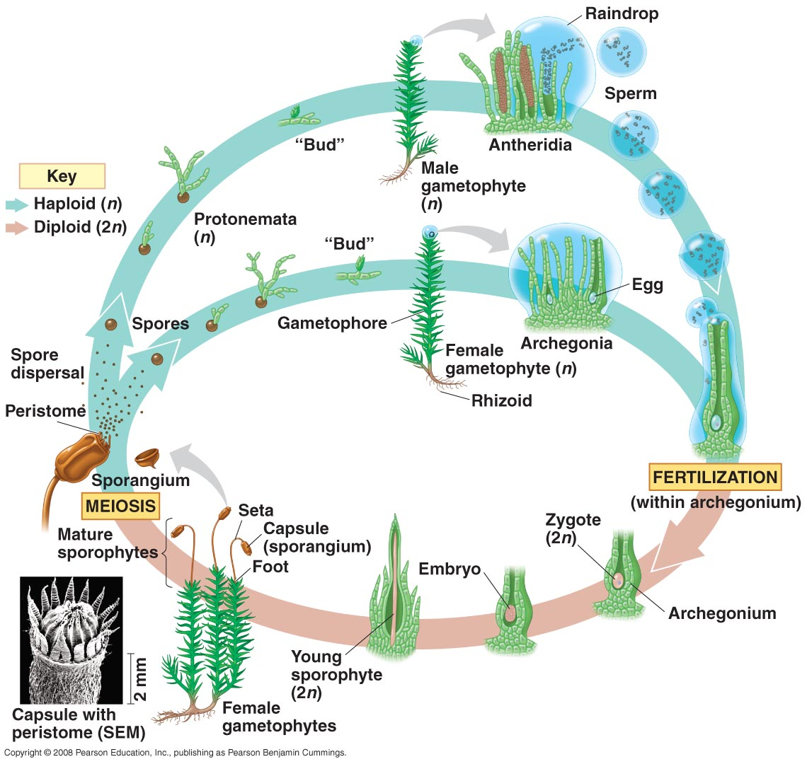 Plants Life Cycle Amp Structure