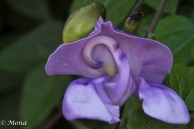 ... the blooming flower on the vine covering the wall