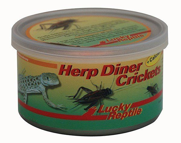 Herp Diner Crickets Small 35gr + Calcium