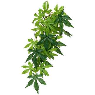 Exo Terra Jungle Plant Abulition