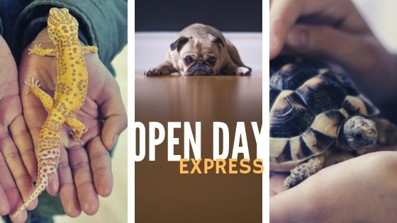 Open day Express
