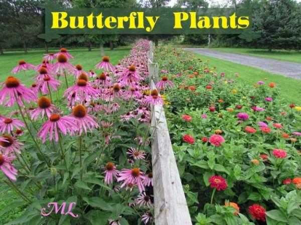 butterfly plants list