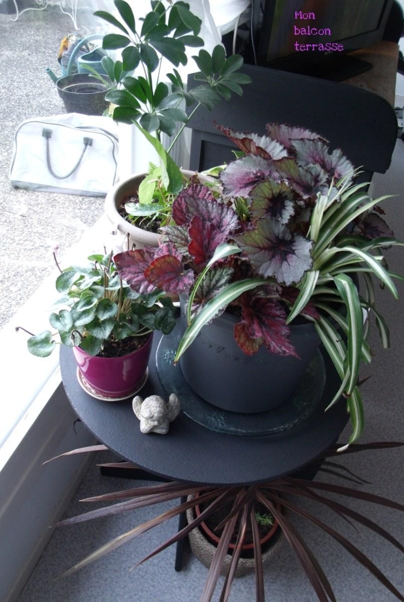 Plantes dinterieur  Balcon Terrasse petit jardin en pot sur le balcon