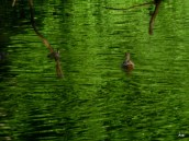 vert d'eau
