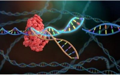 Alerte sur le forçage génétique