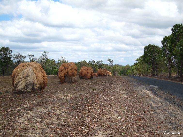 Termitières du nord Queensland