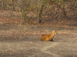 Parc national de Mole, Ghana