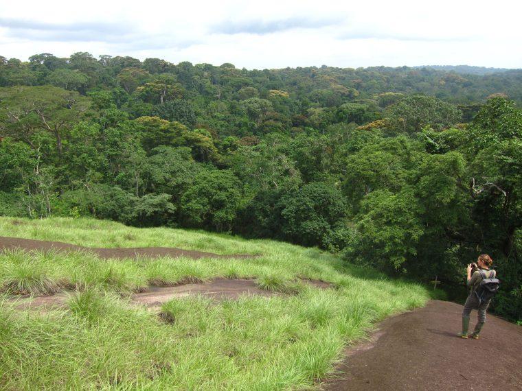 Le Parc national de Taï, joyaux vert de la Côte d'Ivoire