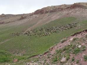 A large flock of sheep grazes on the mountainside above Karakeche
