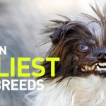 """These 10 Dogs Were Called The """"Ugliest In The World""""… See The Faces Of The Sad List"""