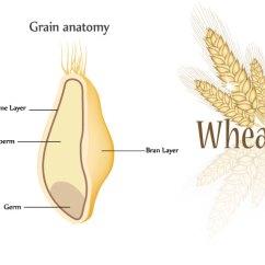Grain Kernel Diagram 49cc Parts Whole Grains Mondelez Nutrition Science Anatomy And Nutritional Composition