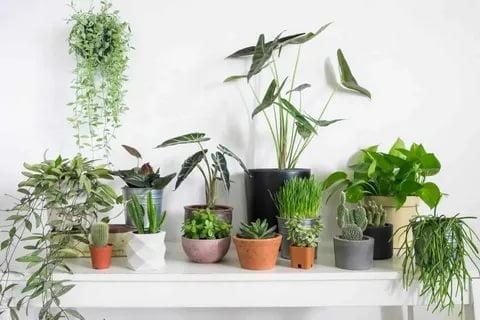 خصائص النباتات الطبية
