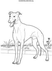 Cani da colorare  Mondo Bimbo