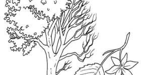 Albero Carpino da colorare — Mondo Bimbo