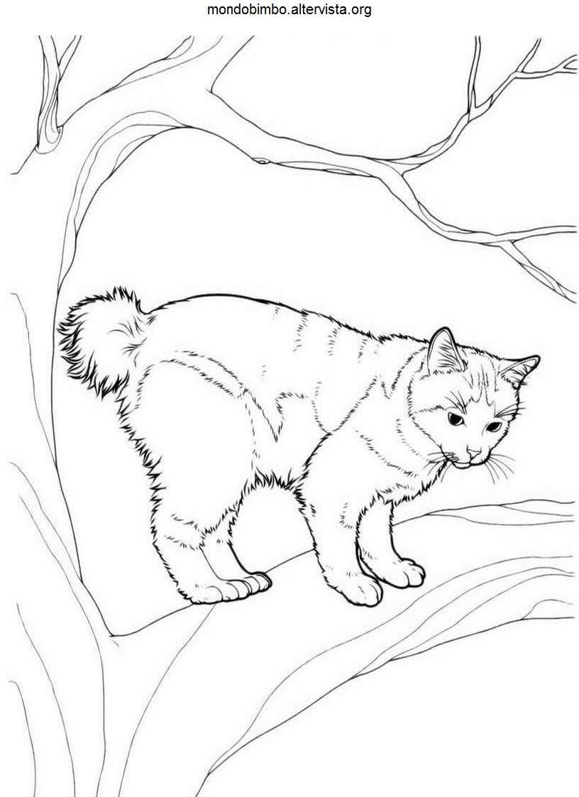 Gatti da colorare — Mondo Bimbo