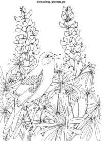 Uccelli da colorare  Mondo Bimbo
