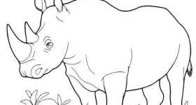 Rinoceronti da colorare — Mondo Bimbo