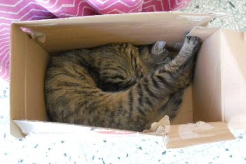 gatti, scatole, contenitori, forma, massa