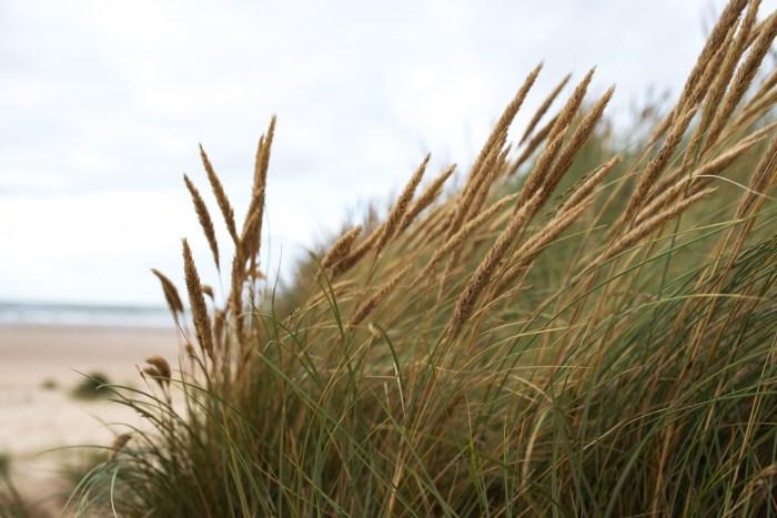 Holkham-Beach-Norfolk-11