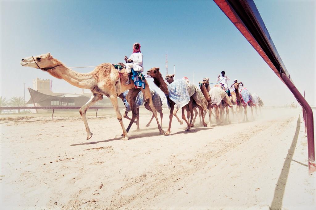 Adventure Activities in Qatar