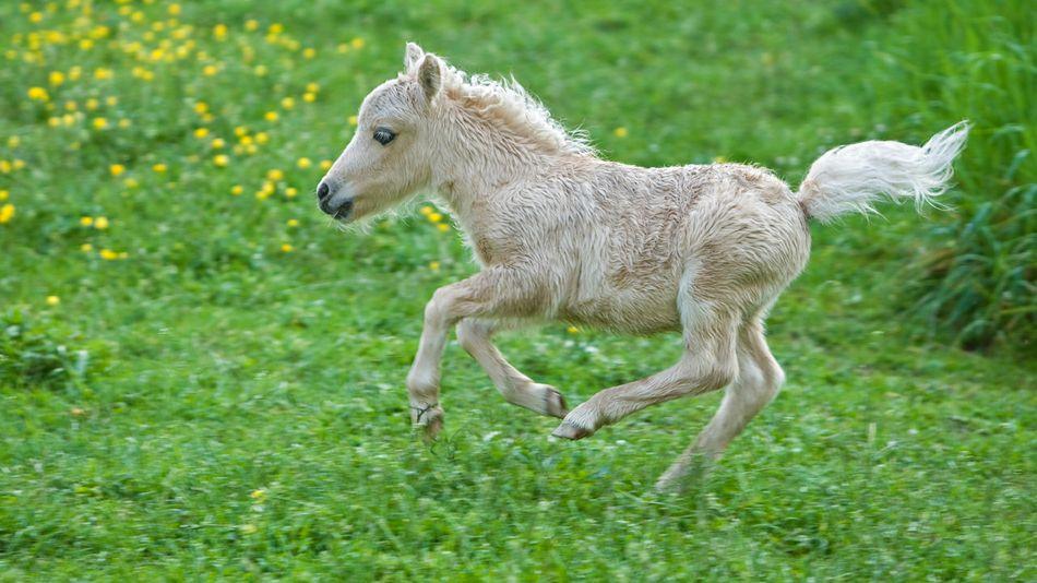 11 baby animals so