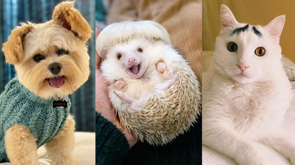 20 Instagram-famous animals to follow for a cuter timeline