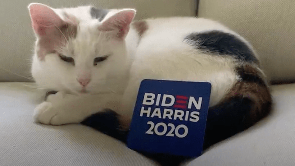 Joe Biden and Kamala Harris enlist adorable cats to help them defeat Trump
