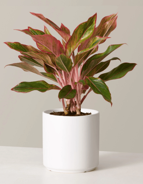Become a plant parent with Cyber Monday deals from The Sill