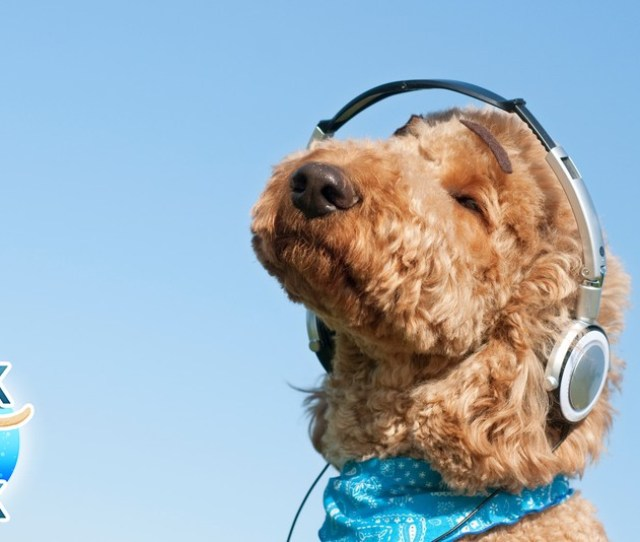This Pup Is Either Listening To Snoop Dogg Or Bow Wow