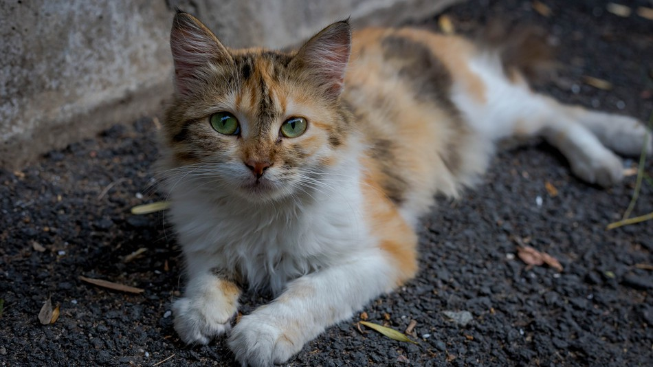 Chinese internet giant Baidu has unveiled what it calls the first smart cat shelter.