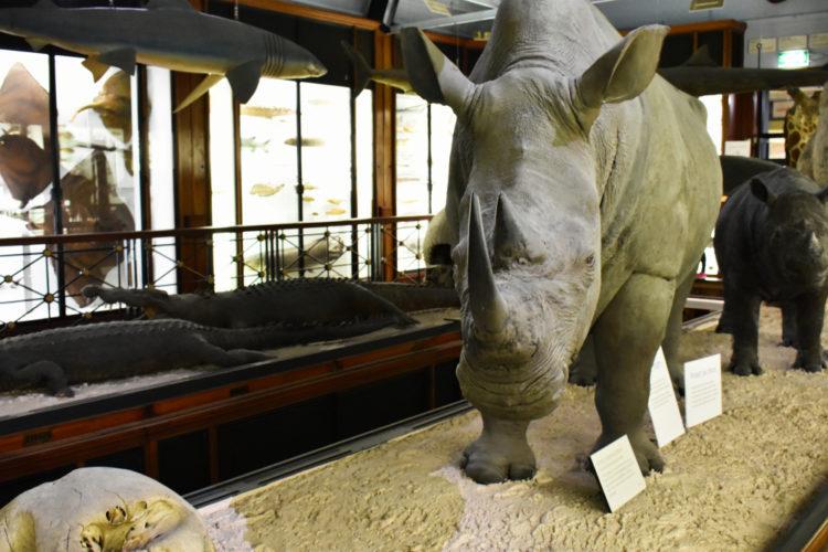 Touchstone Wildlife and Art Museum