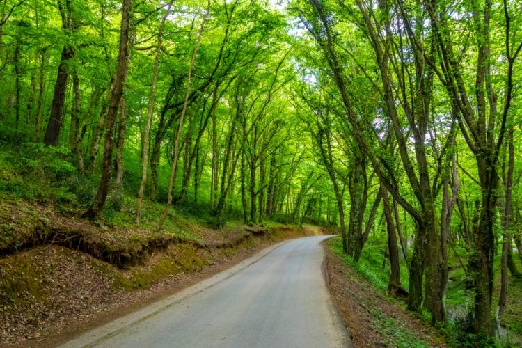 Hiking Trail Istanbul