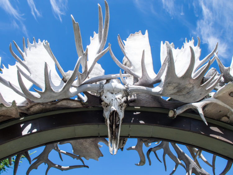 Photograph of the Antler Arch