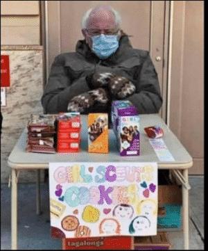 bernie girl scout cookie meme