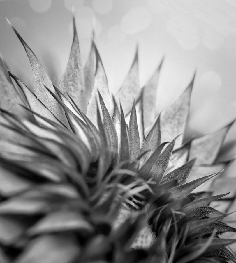 An Honest Look at ARAT Photography