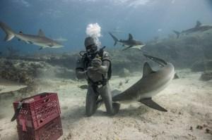 shark proof cost sharksuit neptunic
