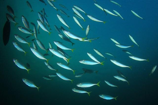 walmart cheap healthy food sardines