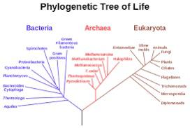 Evolutionary Forks and Dividends
