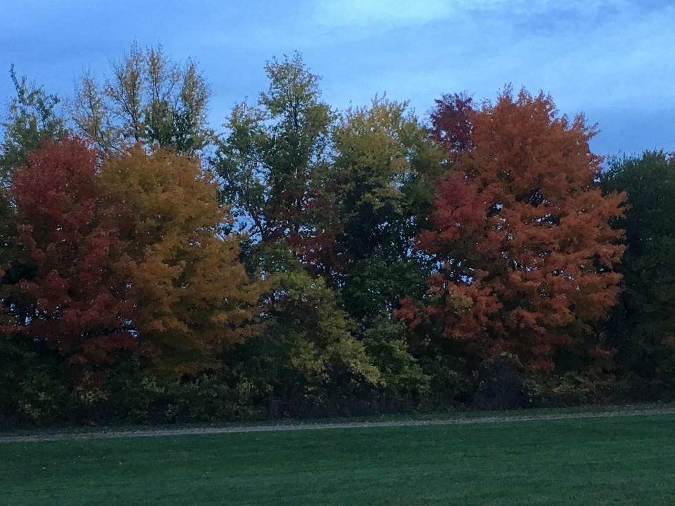 15 Frugal Fall Family Acitivities // Money Savvy Living #fall #autumn #family #familyfun #fallactivities #leaves