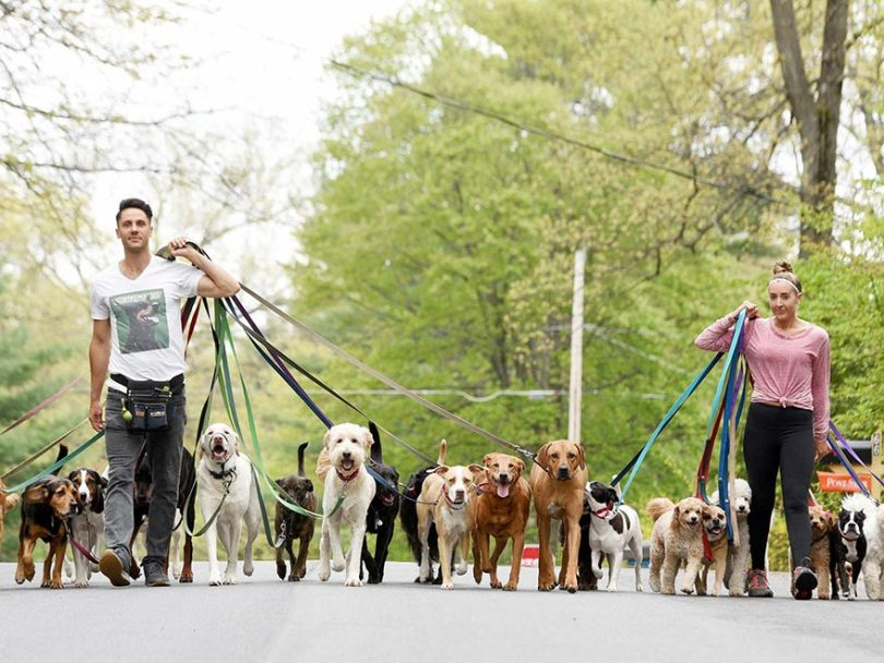 become a dog walkers